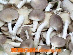 果蔬百科秀珍菇